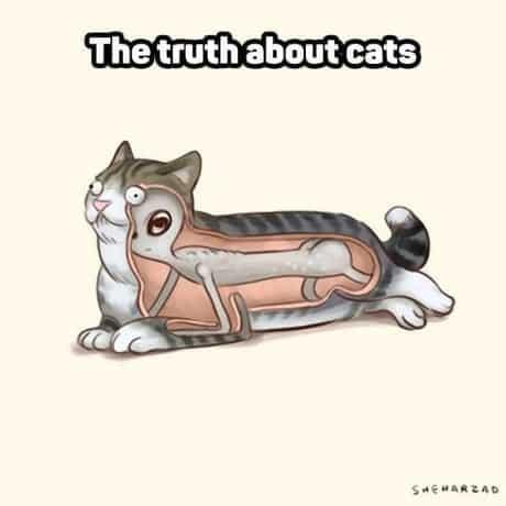 adevarul-despre-pisici