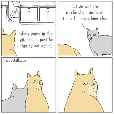 ce-gandesc-pisicile