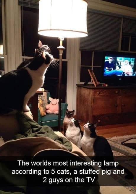 cea-mai-interesanta-lampa