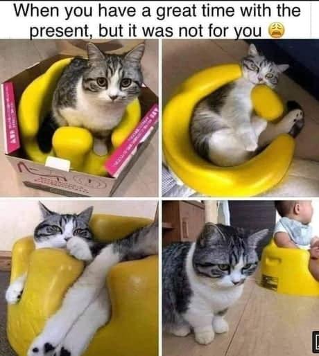 cum-sa-folosesti-olita-pentru-pisici