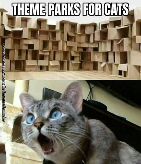 cutii-din-carton-rai-pentru-pisici