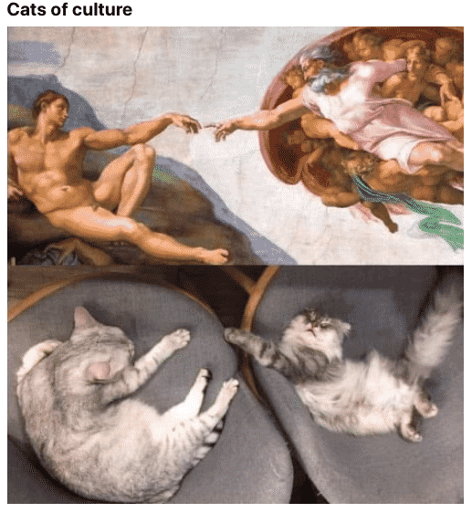 geneza-la-pisici