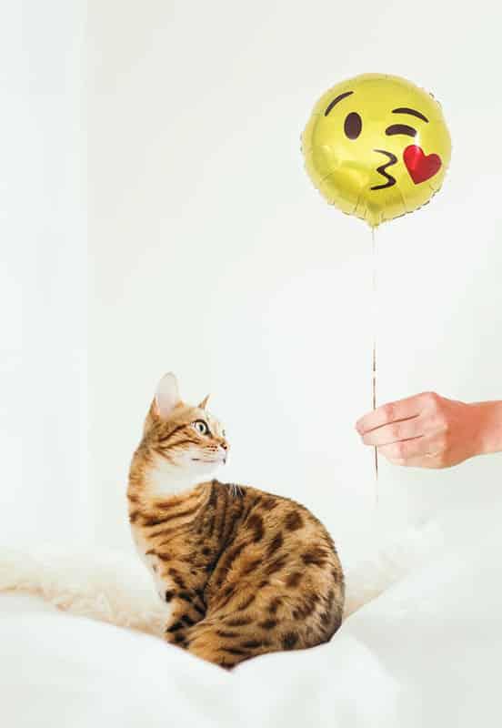 pisica-priveste-balon-emoji