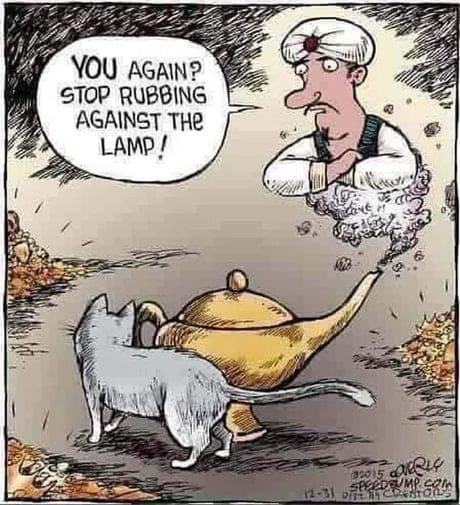pisica-lampa-lui-aladdin
