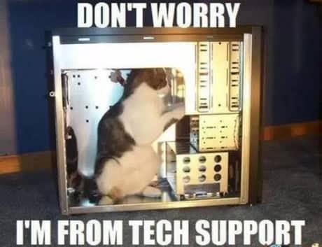 pisica-suport-tehnic